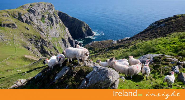 IrelandXO Insight - First steps to finding your Irish ancestors